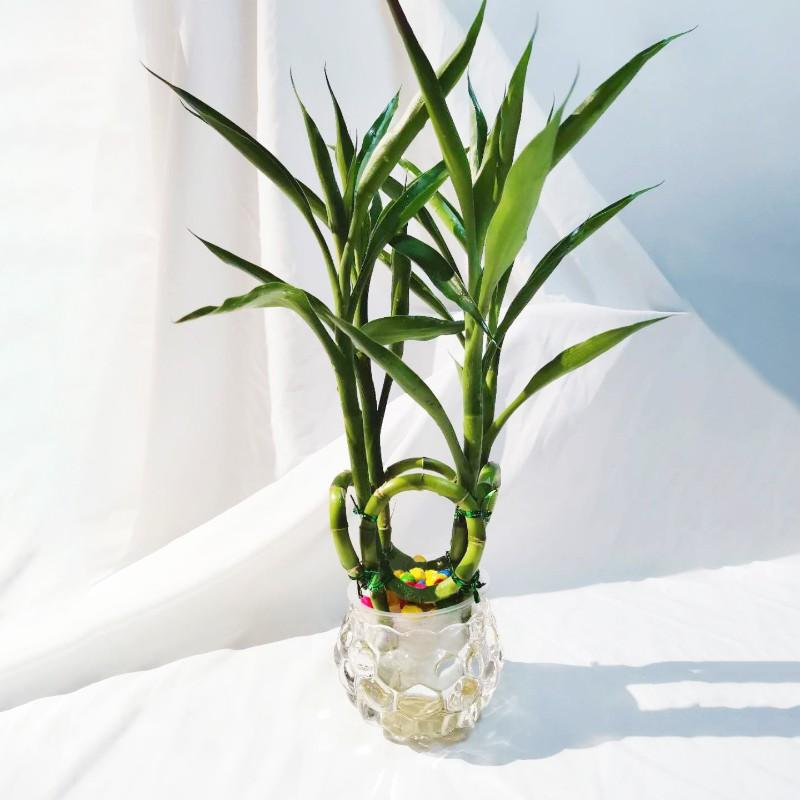 4根富贵竹